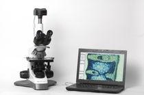 Microscopio óptico / asistido por ordenador / de laboratorio