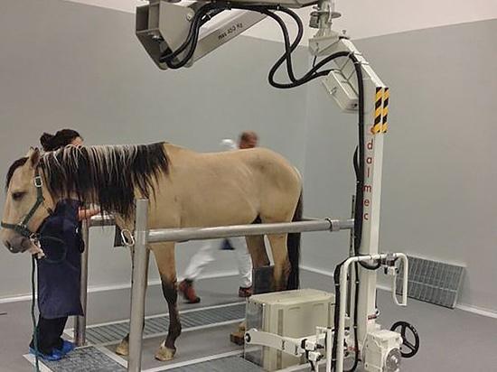 Manipulador Partner PES para la manipulación de equipos de radiografía en el sector hípico.