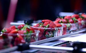 Procesamiento de frutas y hortalizas