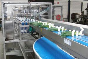 línea de procesamiento de hortalizas