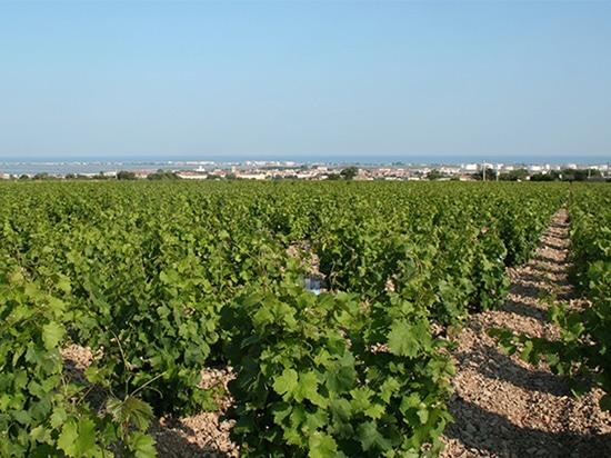 """Unico filter, uno de los productos """"spotlight"""" de VLS Technologies, también llega a Languedoc"""