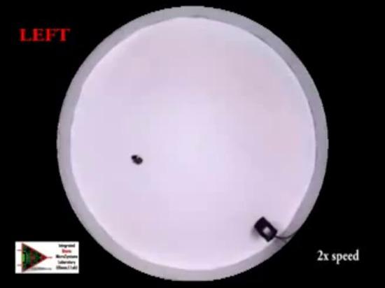Dirección acústica de la cucaracha Biobots